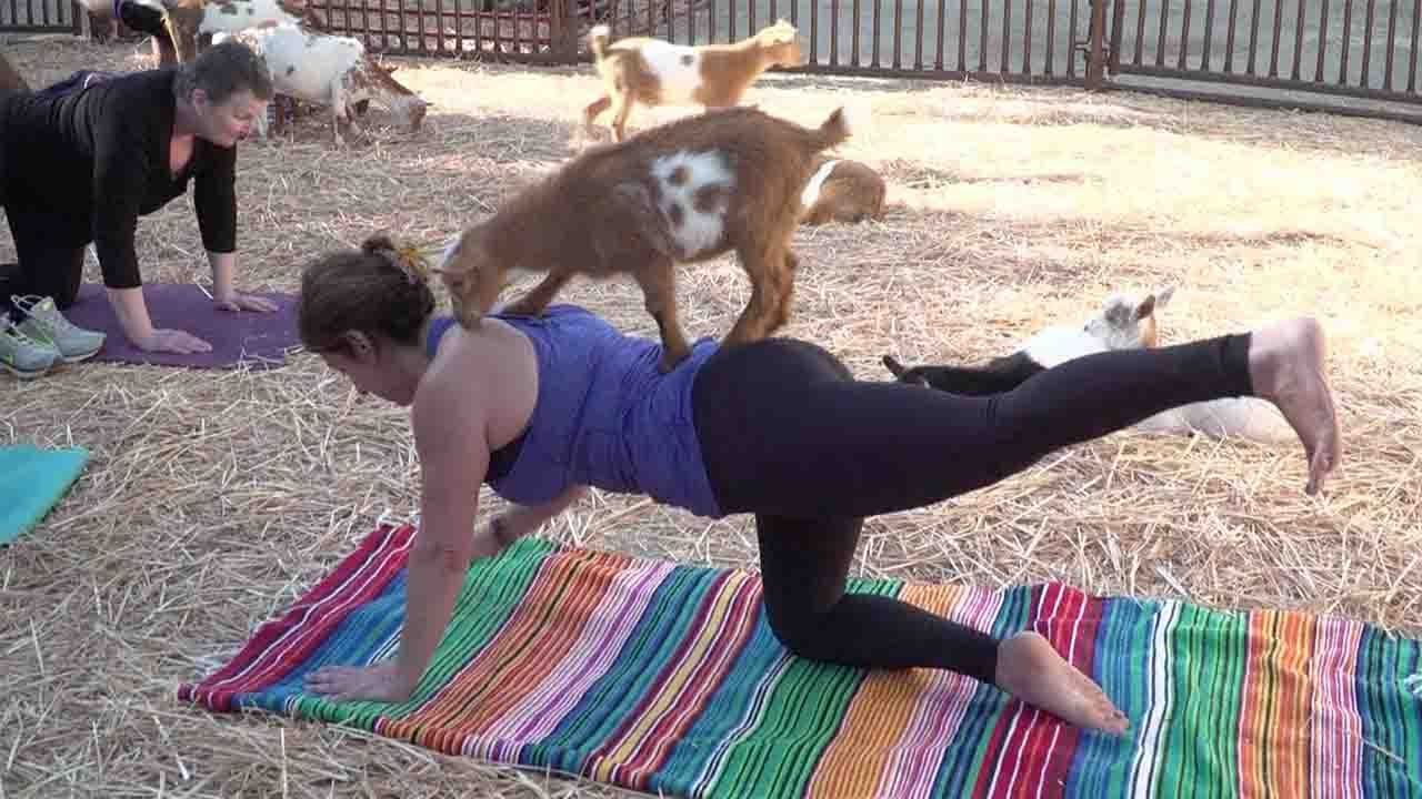 Yoga New Farm