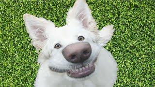 ТОП СМЕШНЫХ ПРИКОЛОВ С КОТАМИ, СОБАКАМИ И ДРУГИМИ ЖИВОТНЫМИ/Смешные кошки – Funny Cats/FUNNY PETS #1