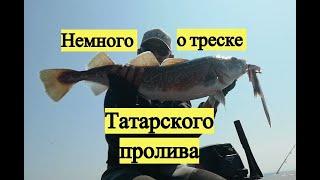 Немного от треске Татарского пролива / Pacific Cod & Walleye Pollack