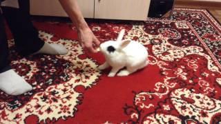 Жадный кролик