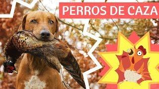 El fascinante mundo de los perros de caza