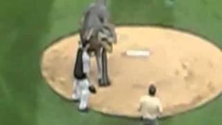 dinosaur baseball