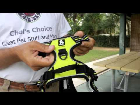 Best Harness For Dogs
