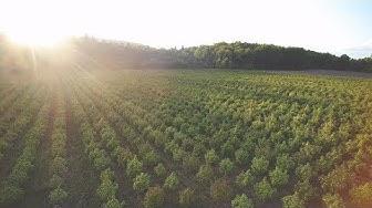 How to become Cannabis CBD Broker Hemp Farming Cannabis Farmer CBD Processor Buy CBD 2018 Farm Bill