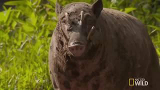 Top 15 Loài Động Vật Chắc Chắn Bạn Chưa Bao Giờ Thấy Trong Cuộc Đời