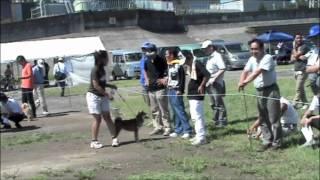 Shonanmimasasou filmz!◇ NIPPO kanagawa dog show in japan 2011 平成...