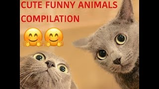TRY NOT TO LAUGH - CUTE FUNNY ANIMALS COMPILATION 🐶