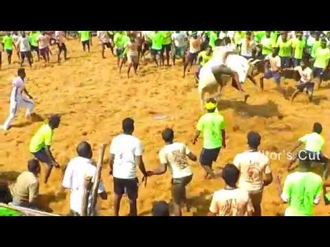 Tribute to every Tamil soul who fought for Jallikattu