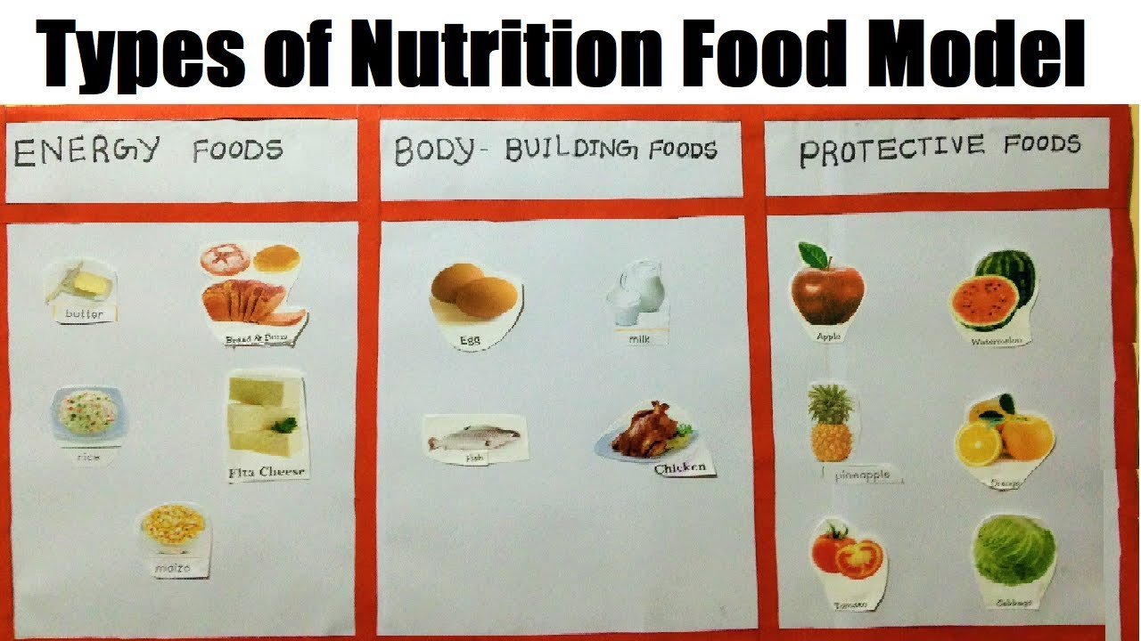 types of nutrition food MODEL FOR SCHOOL SCIENCE EXHIBITION PROJECT
