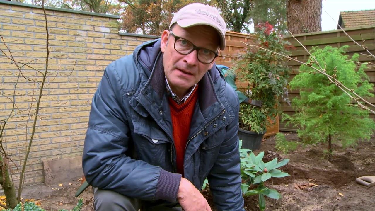 Gehölze Pflanzen: Tipps Und Tricks | Der Pflanzplan | Garten Neu Anlegen  Teil 3 | Herbstpflanzung