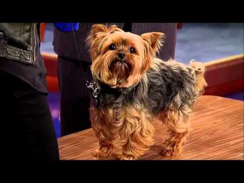 Talking Dog says 'Obama' -- David Letterman Stupid Pet Tricks  -- Kirby Easler, Grabel