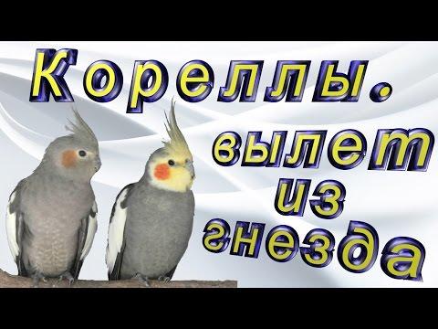 вылет из Пулково смотреть онлайн бесплатно — хорошее
