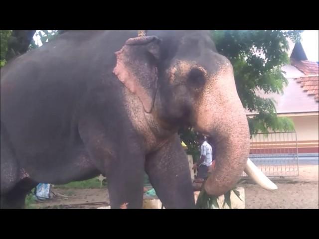 Ernakulam Sivakumar- Kerala Elephant Heroes