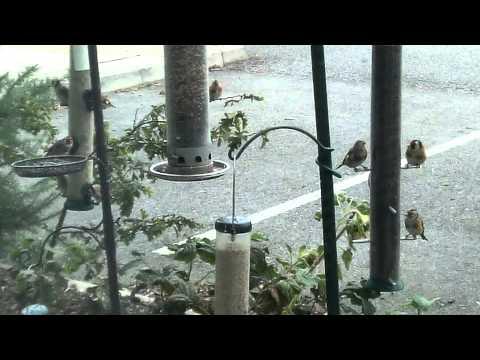 Birds flock to Bill Oddie
