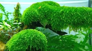 Bí quyết giúp hồ thủy sinh phát triển xanh tốt và không rêu hại.