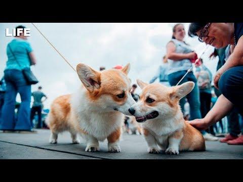 Самых красивых собак на планете выбрали в Москве