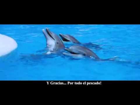 hasta-siempre-y-gracias-por-todo-el-pescado-(lírica-de-la-canción-subtitulada-al-español)