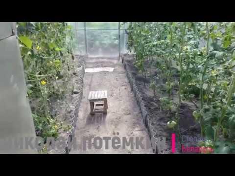 Мои томаты Биг-Биф | опрыскивание | обрабатывать | фунгицидами | пятнистость | опрыскивать | фитофтороз | фитофтора | фузариоз | фитофто | томатов