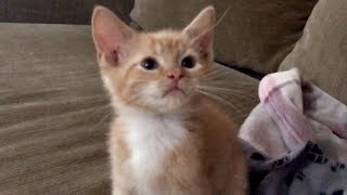 Newest Bottle Kitten Needed A Litter Box & Dealing With Fleas
