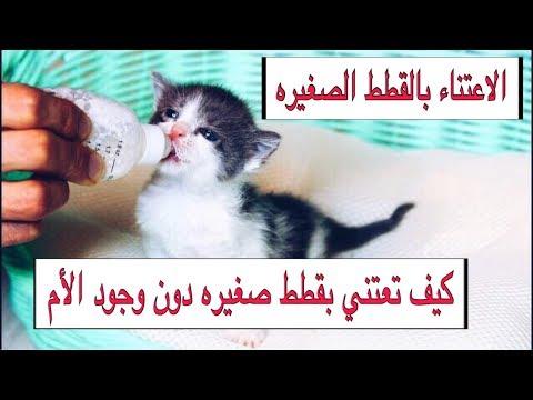 العنايه بالقطط الصغيره من عمر يوم واحد الى شهرين بدون امهم التغذيه / التحميم   Mohamed Vlog