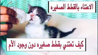 العنايه بالقطط الصغيره من عمر يوم واحد الى شهرين بدون امهم التغذيه / التحميم | Mohamed Vlog