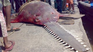 20 Weird Animals That Will Give You Chills