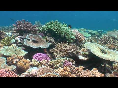 Gorgeous Coral Reef Ten Years After Bleaching, Fiji Islands
