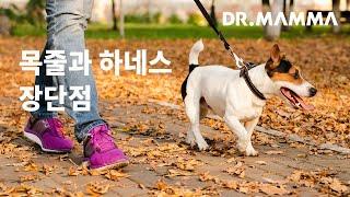 강아지 산책시 목줄과 하네스의 장단점 ㅣ 닥터맘마 수의…