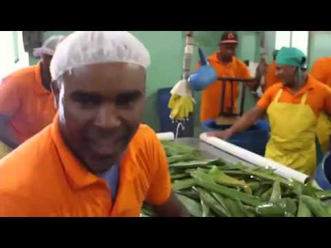 World's Largest Aloe Vera Plantation Owned by Forever Living Products