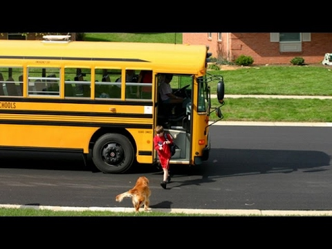 Dogs Waiting And Happy Welcoming When Kids Going Home On The School – Funny Dog Videos 2017