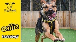 Callie the German Shepherd Loves Her Training So Much!   Dogs Trust Glasgow