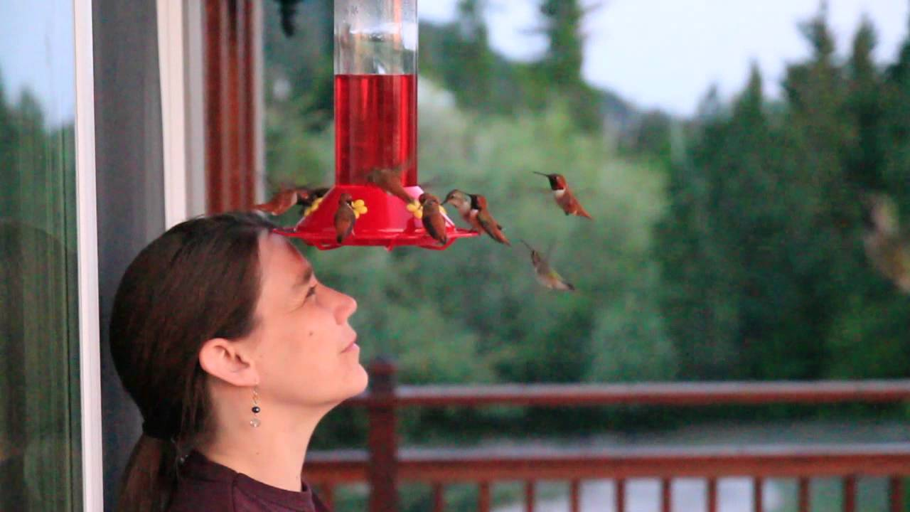 choosing choose happy mind with hummingbird hummingbirds hanging tips a lf in for perfect the hummers drollyankees designed feeder