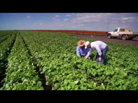 Queensland Agriculture, opportunities for growth