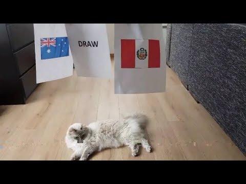 PREDIKSI AUSTRALIA VS PERU VERSI KUCING    PIALA DUNIA 2018