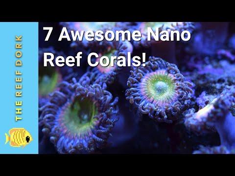 Top 7 Nano Tank Corals