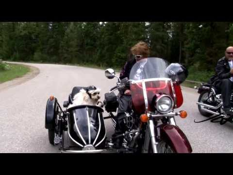 petey-the-sidecar-riding-dog---here-comes-the-rain---youtube