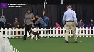 Masters Obedience Championship | WKC | Part 2