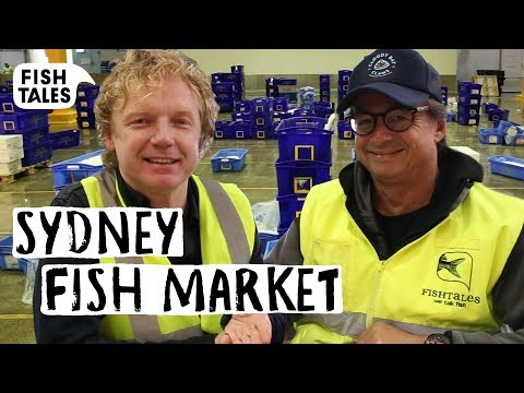 Visiting SYDNEY FISH MARKET Tour | Bart Van Olphen