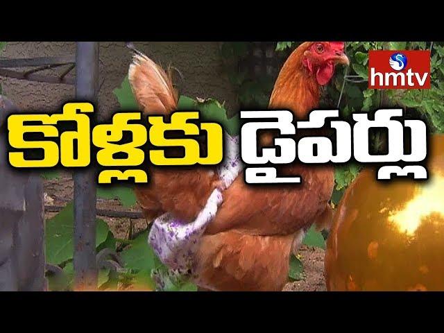 డైపర్లతో తిరుగుతున్న కోళ్లు | Diapers for Hens | hmtv