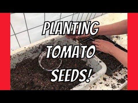 How to Plant Tomato Seeds at AldermanFarms (Thanks Red Dutchess Farm!)