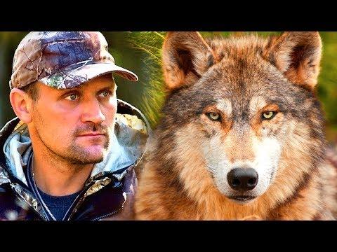 انقذ الصياد ذئب صغير في الغابة ، وبعد سنوات رد الجميل للصياد
