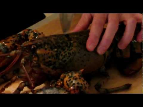How To Kill A Lobster...Humanely