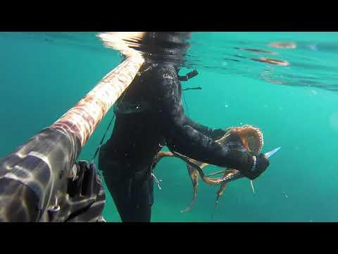 Octopus (4+ Kgs) - Athens
