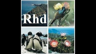 Table Mountain National Park, Animals Nature Africa, 2018 HD