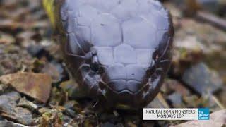 Natural Born Monsters: Australian Sea Serpent