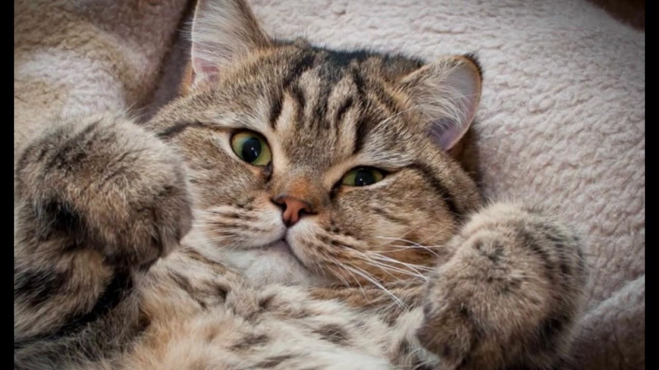 милые котики фото