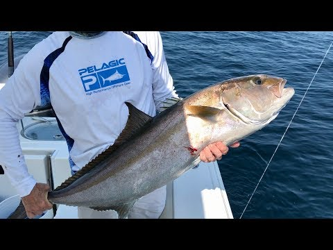 Offshore Fishing in Florida - Lots of Action