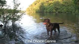 Dog Obedience Training In Haverhill, Ma By First Choice Canine