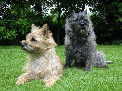 6 Cutest And Friendliest Hypoallergenic Dog Breeds...