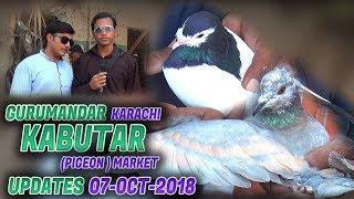 Guru Mandir Kabooter Market 7-10-2018 Latest Updates (Jamshed Asmi Informative Channel)  Urdu Hindi